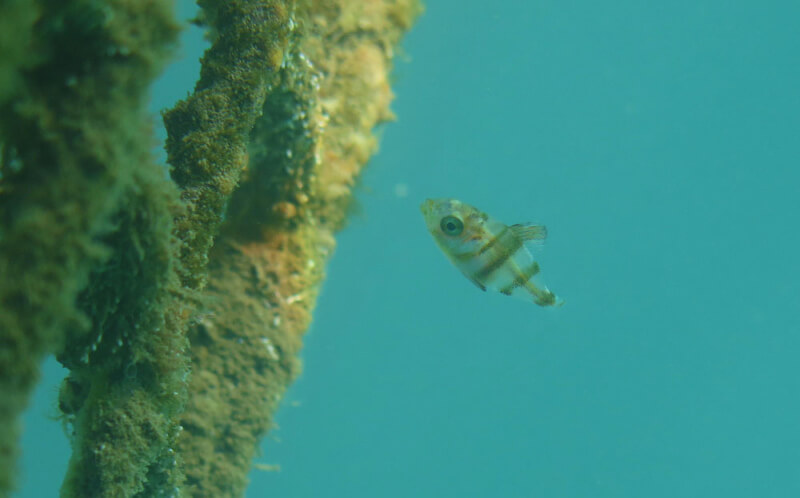 Port-Fréjus très actif en biodiversité marine