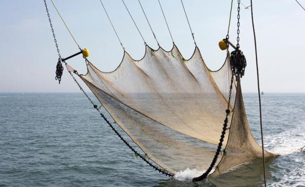 Tous artisans de la Pêche Durable à Port Fréjus dans le Var